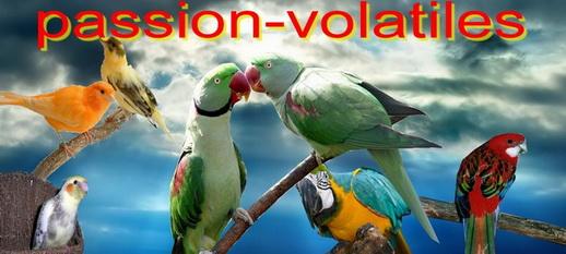 **  PASSION - VOLATILES  **