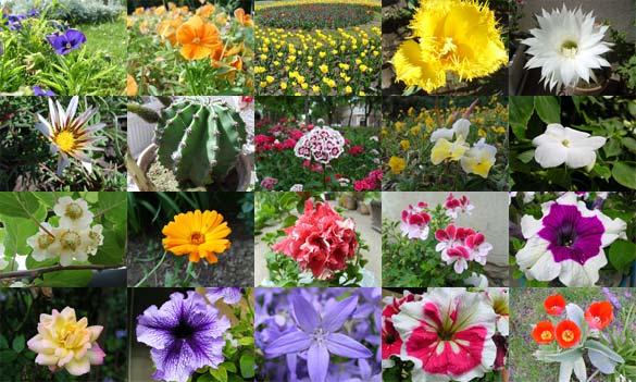تقديم به شما... Flower11
