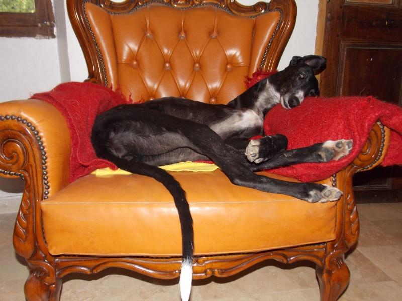GAYA et son fauteuil.... 02710
