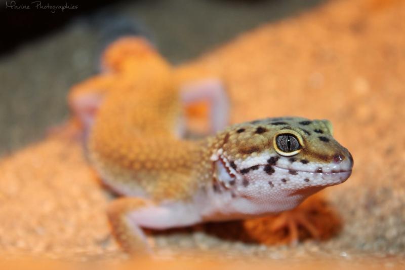 [Geckos Léopard] Krokmou, Mira et Pêche. Img_9613