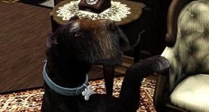 Собаки - Страница 6 2i131336
