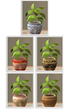 Цветы для дома - Страница 2 Imag1065