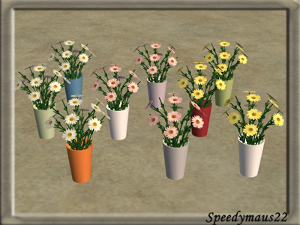 Цветы для дома Image217