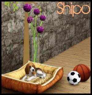 Собаки - Страница 2 Image_81