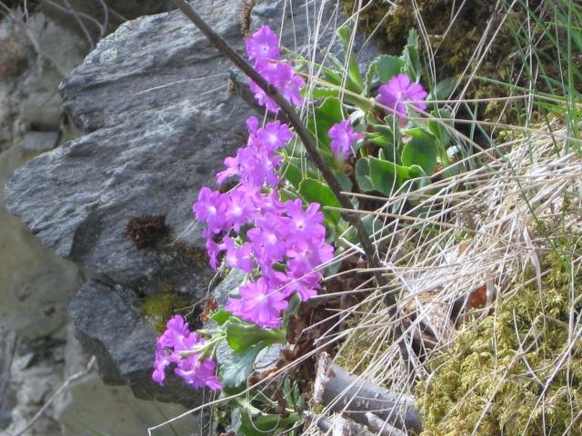 Flore du massif - Page 3 00810