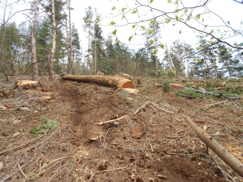 forestiers de roger : quatrième partie - Page 39 Dscn1823