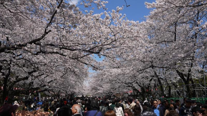 Mini dossier photos ( ma tete + le Japon ) P1010110