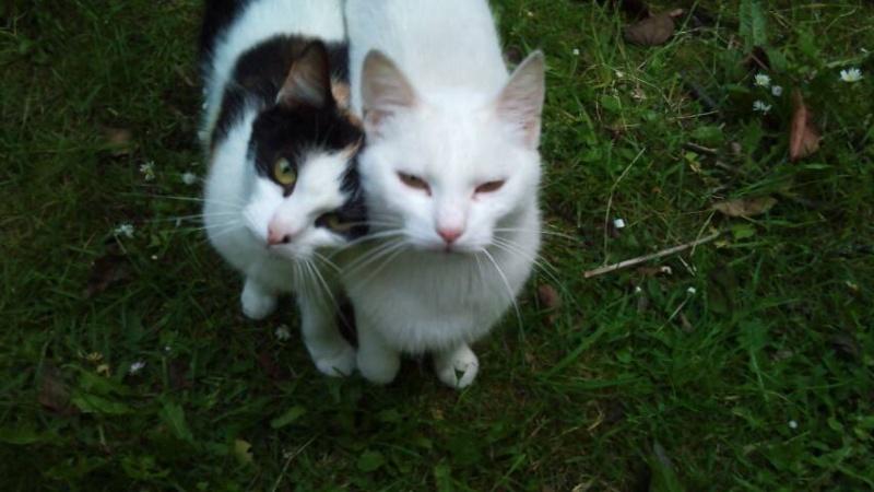 Prise en charge du 7 juin 2013 - Deux chattes et bébés abandonnés en forêt!! Cache_10