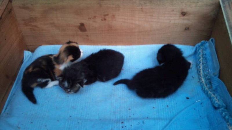 Prise en charge du 7 juin 2013 - Deux chattes et bébés abandonnés en forêt!! Cache_11