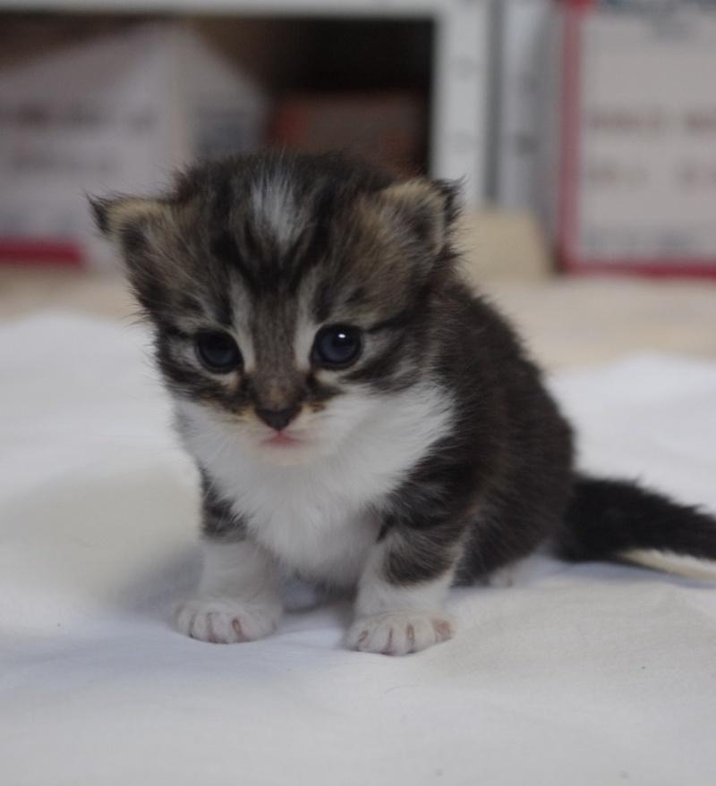 Prise en charge du 7 juin 2013 - Deux chattes et bébés abandonnés en forêt!! Chaton12