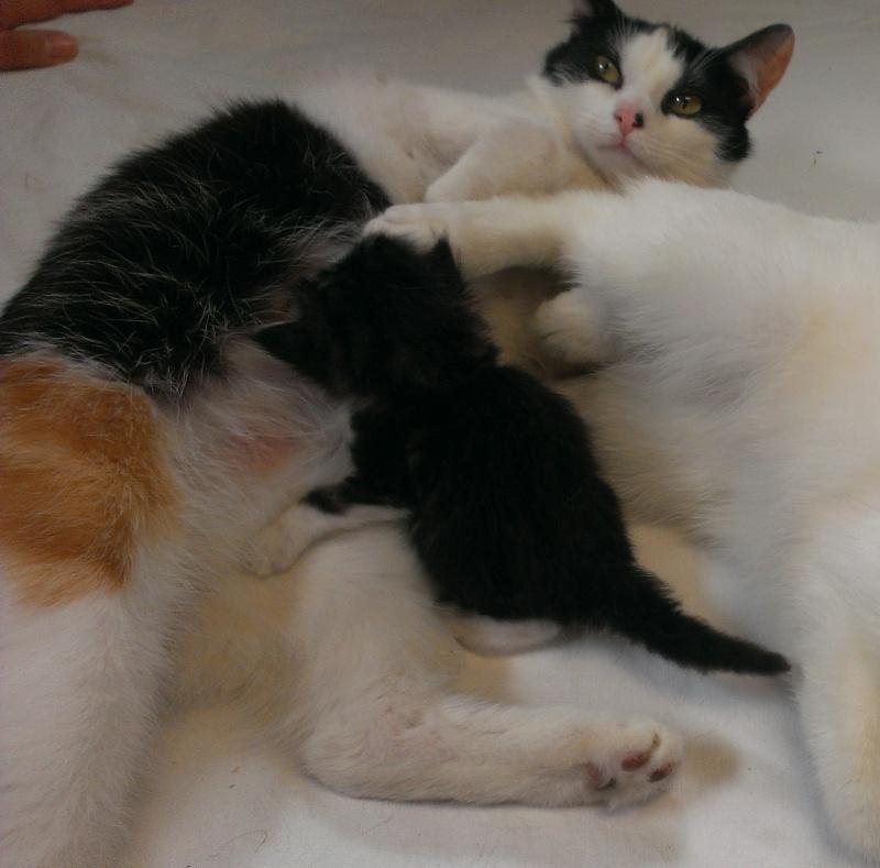 Prise en charge du 7 juin 2013 - Deux chattes et bébés abandonnés en forêt!! Faline11
