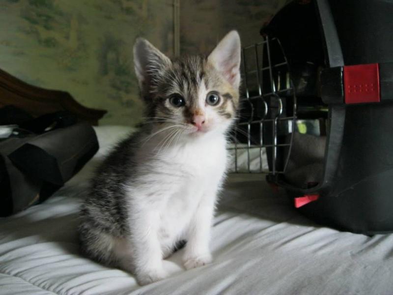 Iron, Chaton de 2 mois trouvé dans la rue, complètement perdu et terrosisé Petitl10