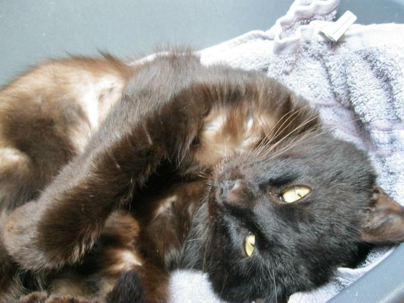 [SAUVETAGE] Beaux Yeux - loulou noir sauvé de la rue en mauvais état - né en 2009 St_ama10