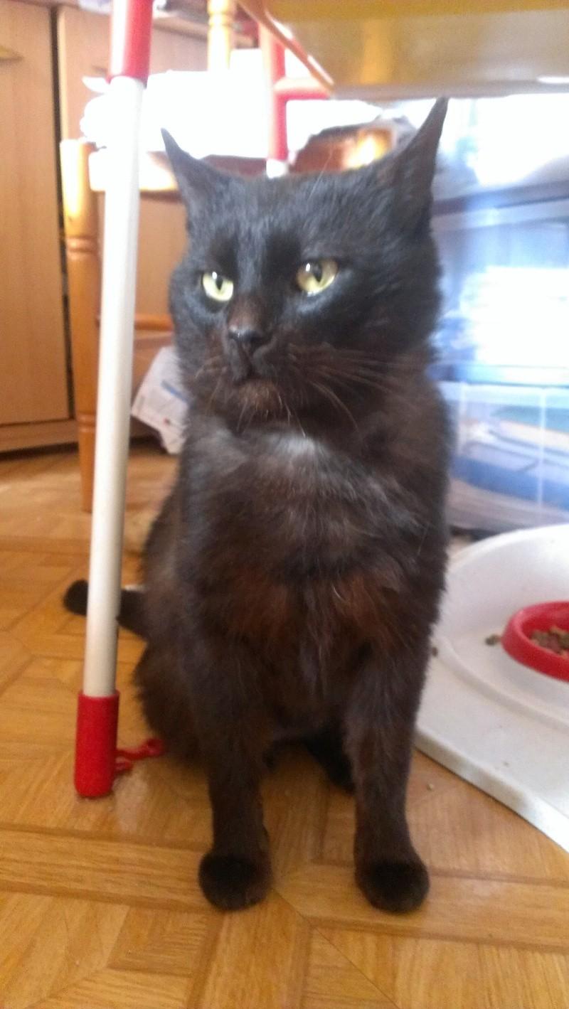 [SAUVETAGE] Beaux Yeux - loulou noir sauvé de la rue en mauvais état - né en 2009 St_ama11
