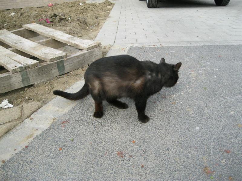 [SAUVETAGE] Beaux Yeux - loulou noir sauvé de la rue en mauvais état - né en 2009 Staman10