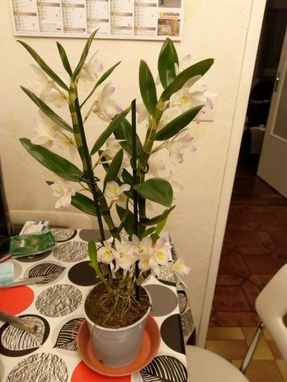 Mes titines (orchidées et autres) Img_2010