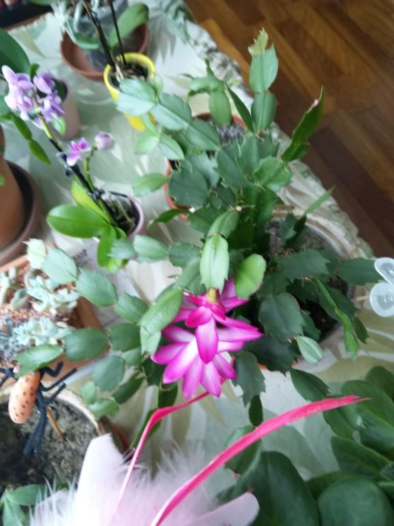 Mes titines (orchidées et autres) Img_2011
