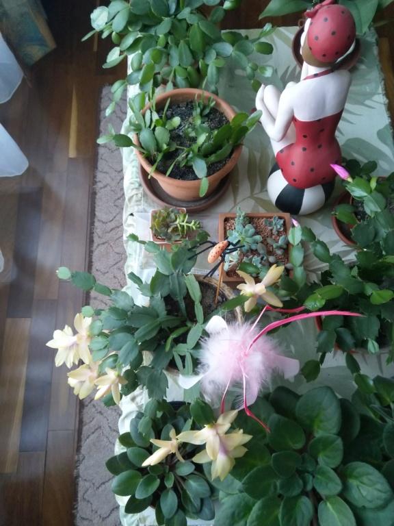 Mes titines (orchidées et autres) Img_2012