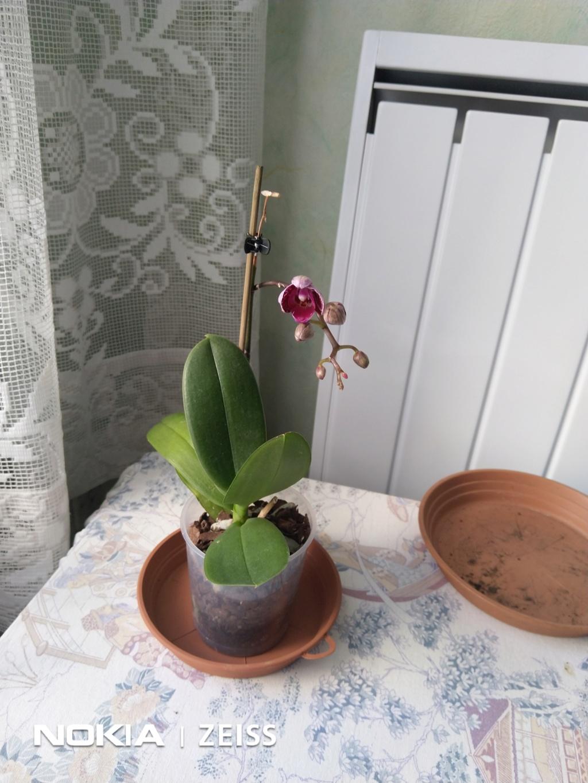 Mes titines (orchidées et autres) Img_2014