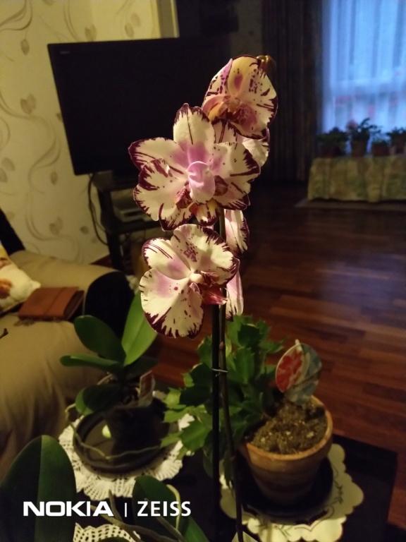 Mes titines (orchidées et autres) Img_2016