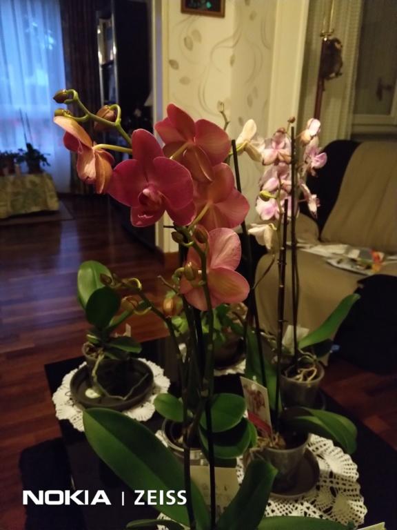 Mes titines (orchidées et autres) Img_2017