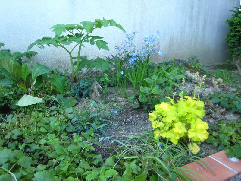 fleurs d'angélique Img_0028