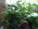 Aero Garden for starting seeds? Seedli10