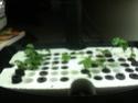 Aero Garden for starting seeds? Smalls10