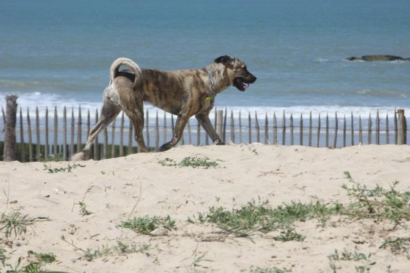 Photo de vos chiens à la plage! - Page 2 52667810