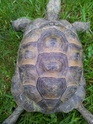 identification 3 tortues 20130411