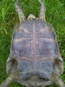 identification 3 tortues 20130412