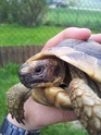 identification 3 tortues 20130413