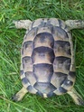 identification 3 tortues 20130414