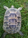 identification 3 tortues 20130417