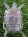 identification 3 tortues 20130418