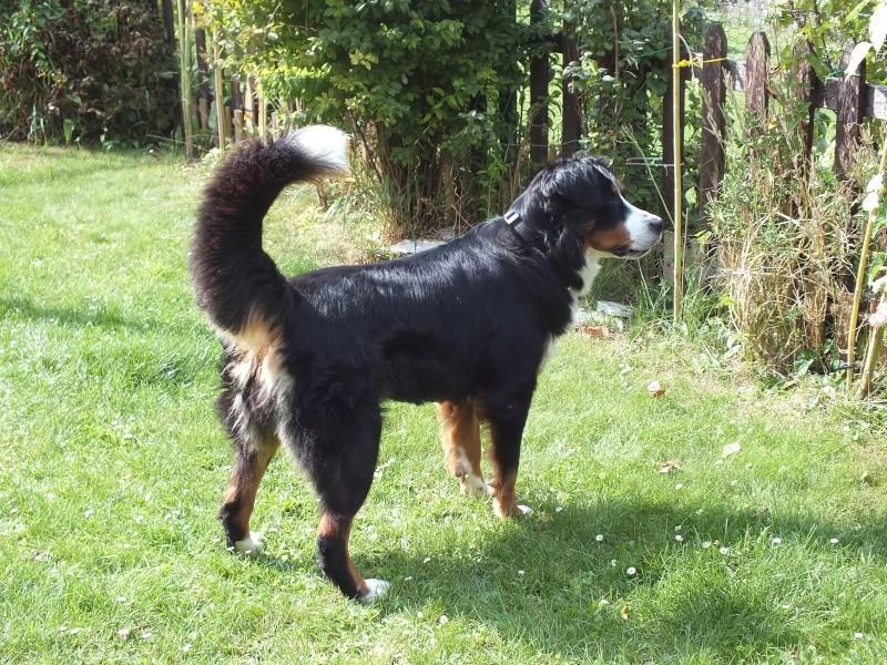 Photo de vos chien noir et beige! Dscf8111