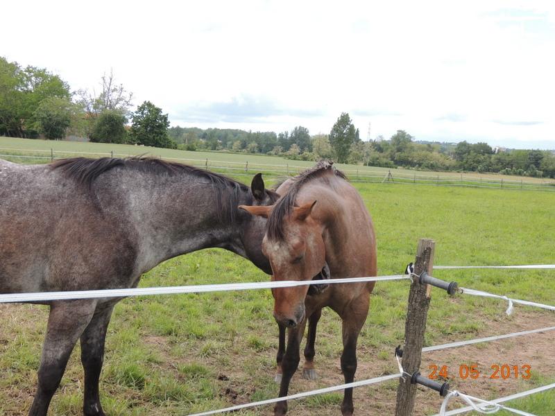 Mes chevaux, un mélange d'un peu tout le monde! - Page 6 01111