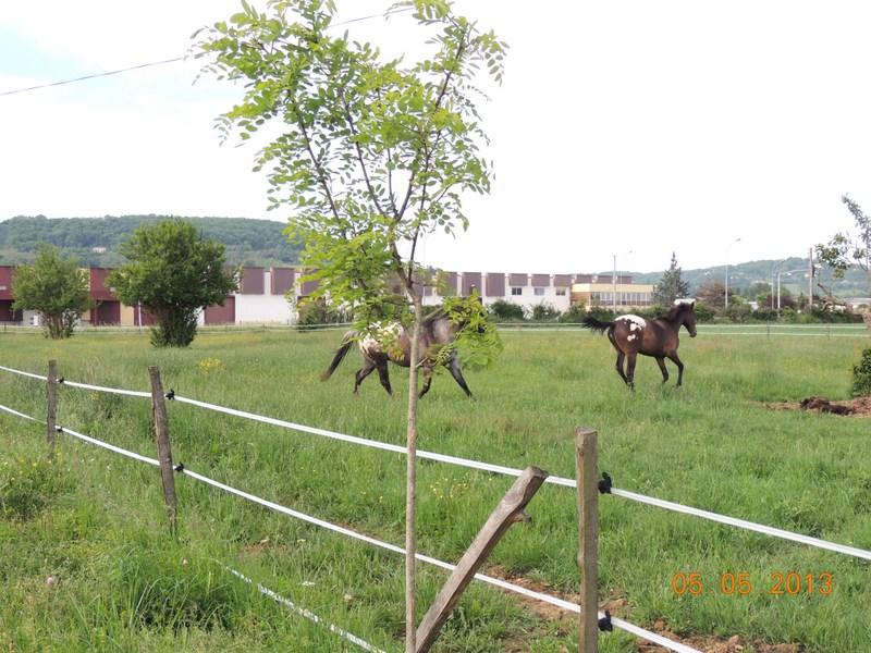 Mes chevaux, un mélange d'un peu tout le monde! - Page 5 013-0010