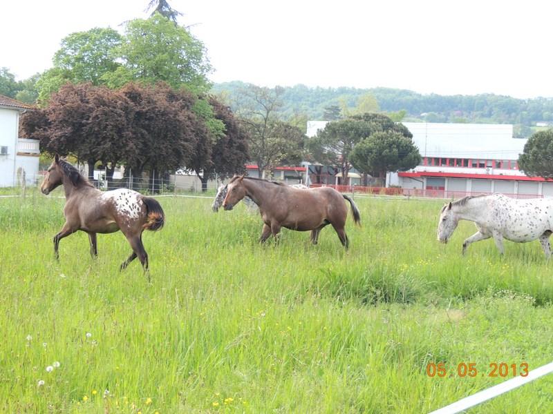 Mes chevaux, un mélange d'un peu tout le monde! - Page 5 014-0010