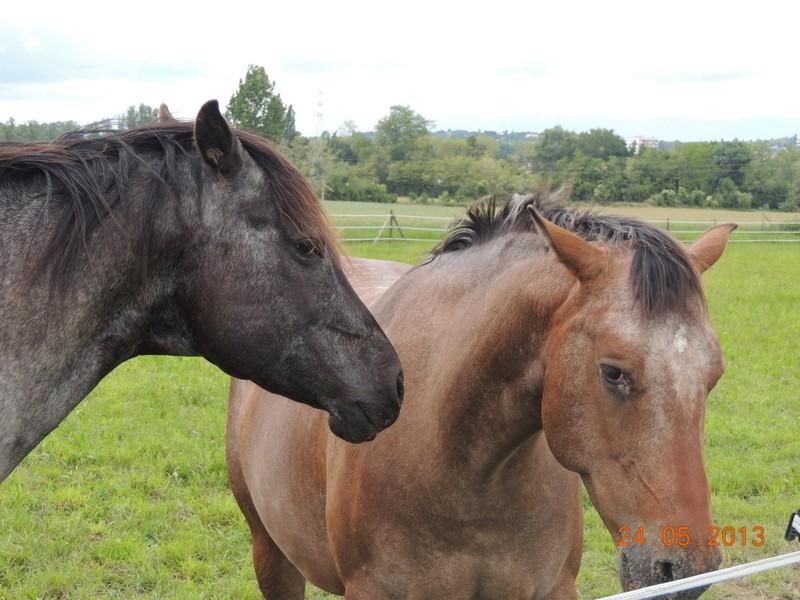Mes chevaux, un mélange d'un peu tout le monde! - Page 6 01411