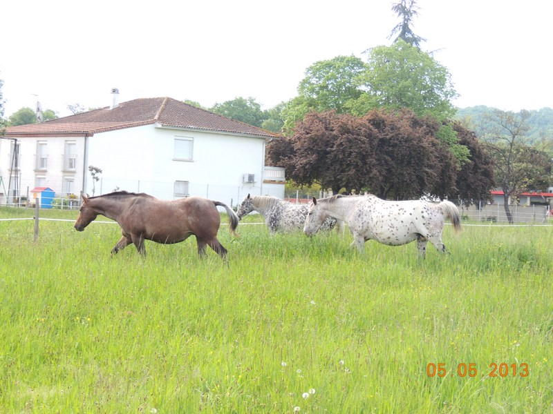 Mes chevaux, un mélange d'un peu tout le monde! - Page 5 015-0010