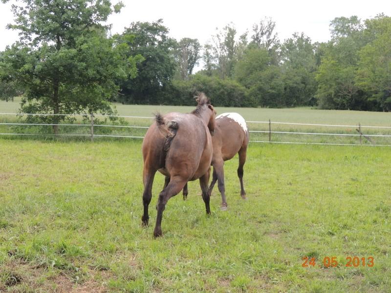 Mes chevaux, un mélange d'un peu tout le monde! - Page 6 01510