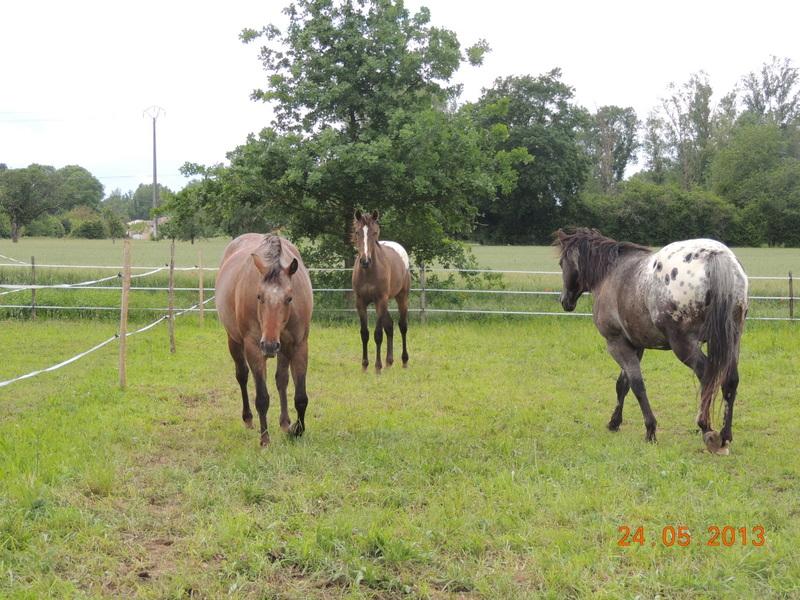 Mes chevaux, un mélange d'un peu tout le monde! - Page 6 01610