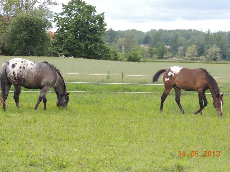Mes chevaux, un mélange d'un peu tout le monde! - Page 6 02210