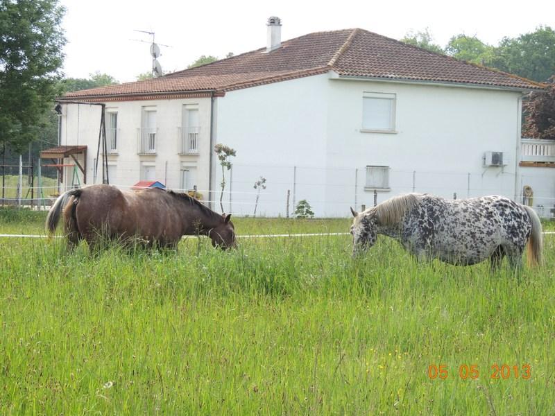 Mes chevaux, un mélange d'un peu tout le monde! - Page 5 025-0010