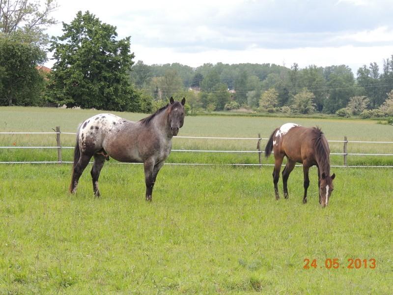 Mes chevaux, un mélange d'un peu tout le monde! - Page 6 02510