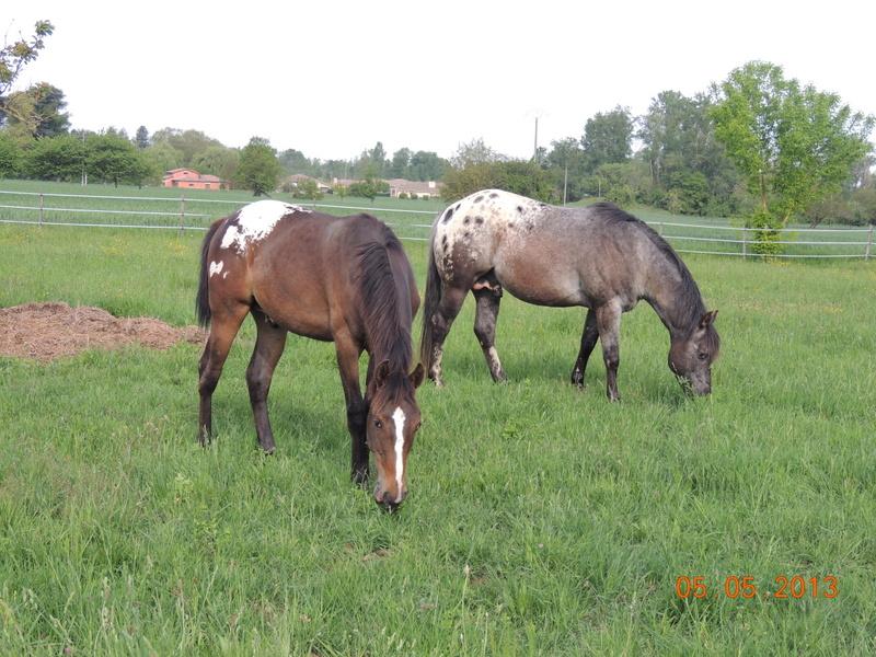 Mes chevaux, un mélange d'un peu tout le monde! - Page 5 037-0010
