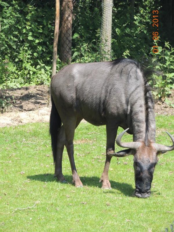 Le Parc Pairi Daiza en Belgique 23310