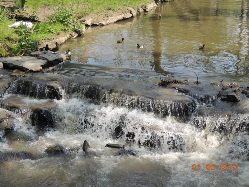 Le Parc Pairi Daiza en Belgique 33310