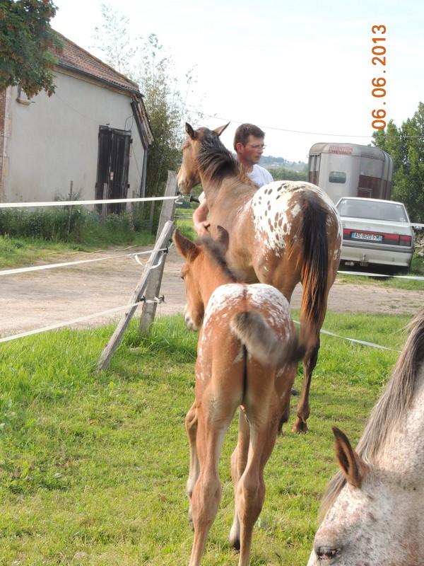 Mes chevaux, un mélange d'un peu tout le monde! - Page 6 Choomy43